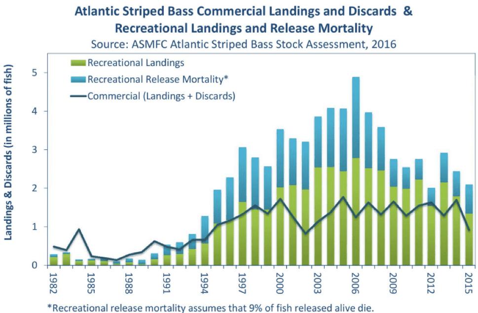 Striped bass landings