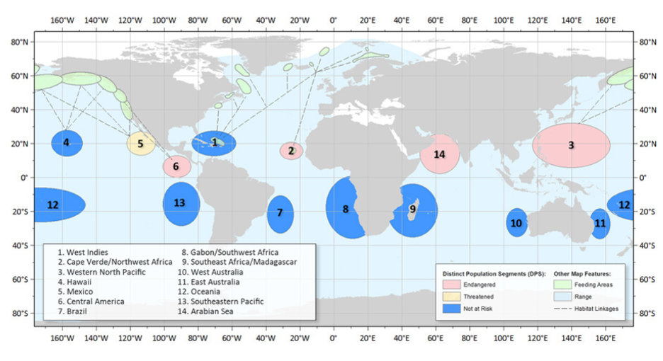 Map of humpback whale populations.