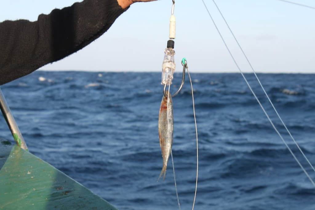 A hookpod baited with squid.
